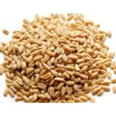 Hard White Natural Wheat #10 Can